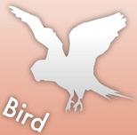 診療できる動物 鳥
